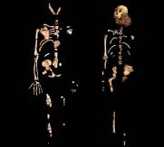MH1 (jobbra) ésMH2 (balra) vázrészei