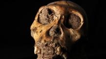MH1 koponyájának közeli felvétele. Fotó: Lee Berger